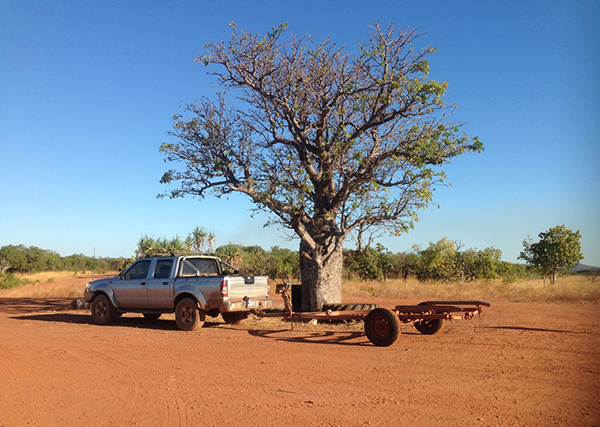 Boat trailer and boab tree